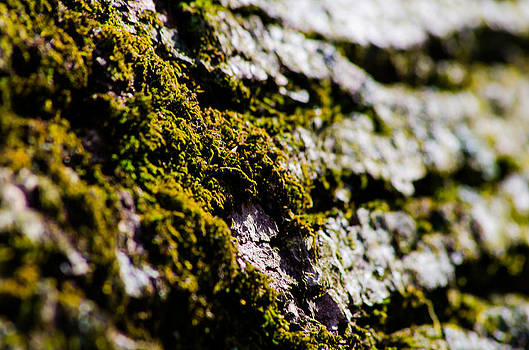 Moss by Joshua M Schreiber