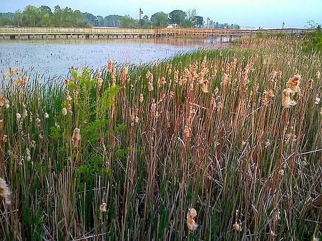 Moss Landing Washington North Carolina by Joan Meyland