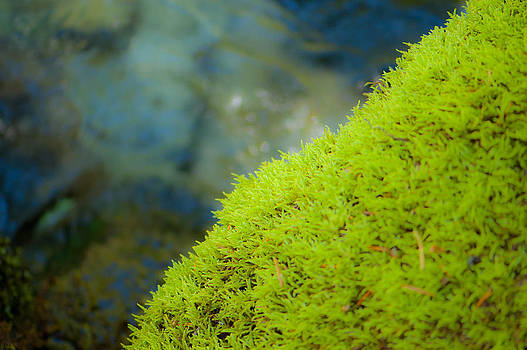Moss on River by Sarah Crites