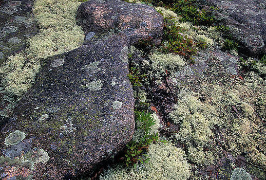 Moss on Rock-Lubec-Maine by Harold E McCray