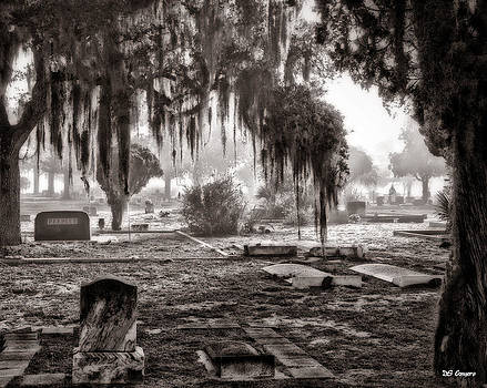 Moss over the graveyard by Dale Conyers