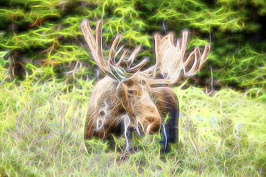 James BO  Insogna - Moose Glow
