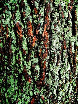 Mossy Bark by Mark Malitz