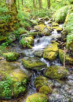 Mossy Creek by Bob Jackson