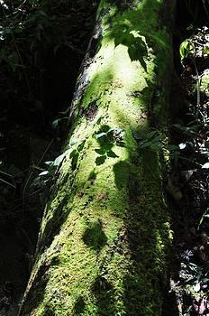 Mary Frances - Mossy Fallen Tree