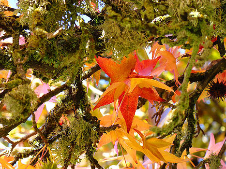 Baslee Troutman - Mossy Lichen Tree Leaves Art Prints Autumn