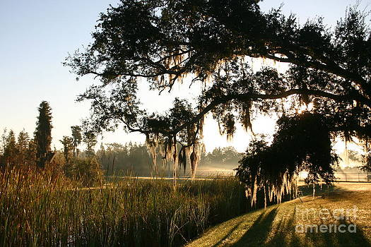 Mossy Oak Morning by Jeanne Forsythe
