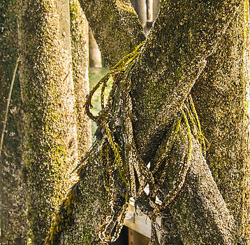 Mossy Pier by Ernest Puglisi