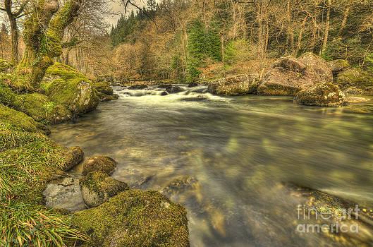 Darren Wilkes - Mossy Rocks