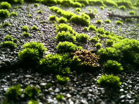 Mossy Roof by Sharon Costa