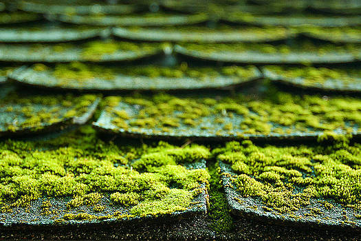 Mossy Roof Tiles by Lisa Chorny