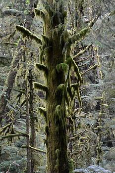 Mossy stump by Linda Larson