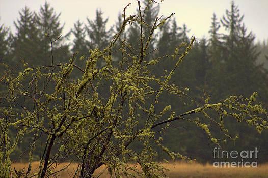 Deanna Proffitt - mossy tree