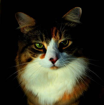 Most Interesting Cat by Stephen Melcher