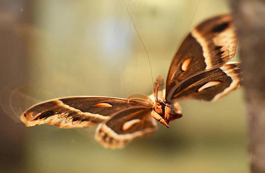 Moth by Melissa Schumacher