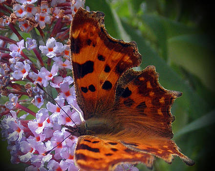 Moth by Russ Murry