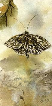Alfred Ng - moth with abstraction