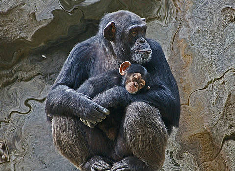 Mother and Child Chimpanzee by Daniele Smith