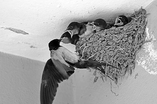 Mother Bird by Can Kalagoglu