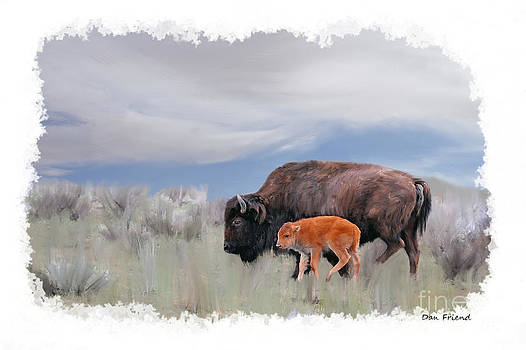 Dan Friend - Mother buffalo with baby