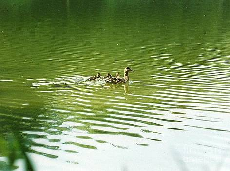 Mother Duck by John Williams