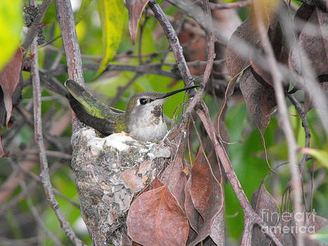 Mother Humming Bird by Peace Gypsy