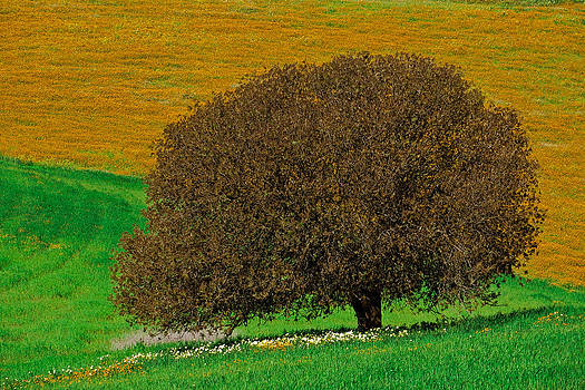 Mother  tree by Jawaharlal Layachi