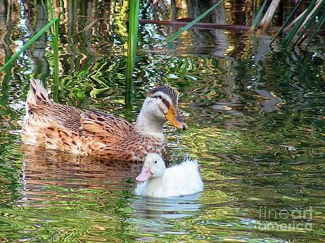 Mother's love by Halyna  Yarova