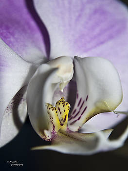 Mother's Orchid by Teresa Dixon