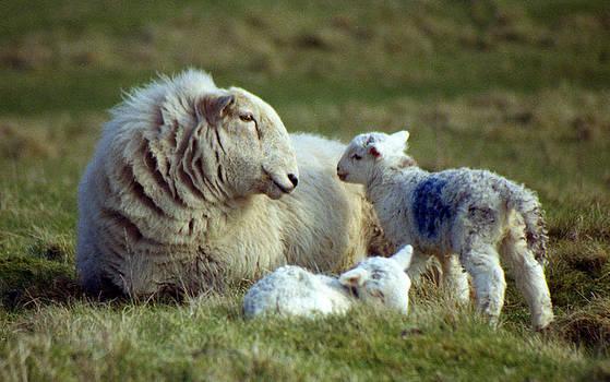 Mothers Pride by Michael Haslam
