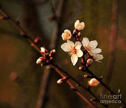 Mother's Spring Blossoms by Marjorie Imbeau