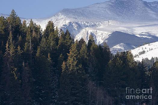 Steve Krull - Mount Evans Woods