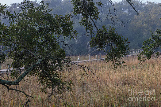 Dale Powell - Mount Pleasant Fog