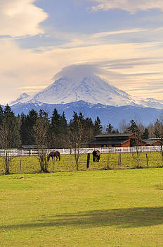 Mount Rainier And Grazing Horses by Gary Silverstein
