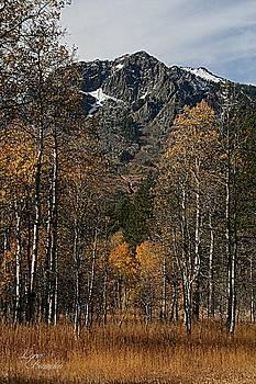 Lynn Bawden - Mount Tallac Autumn