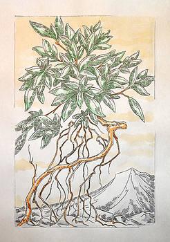 Mountain Azalea by Jeremiah Welsh