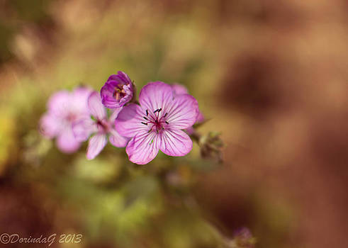 Mountain Blooms by Dorinda Grever