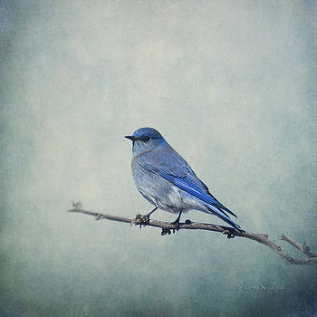 Karen Slagle - Mountain Blue Bird