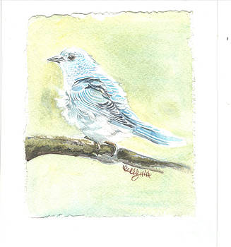 Mountain Bluebird by Callie Smith