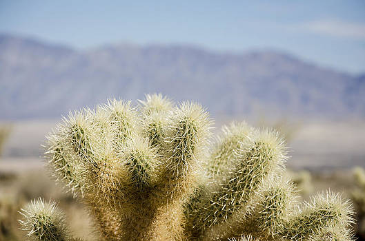 Mountain Cactus by James Blackwell JR