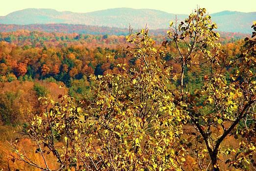 Mountain Foliage Series 012 by Van Ness