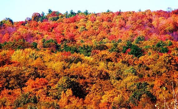 Mountain Foliage Series 015 by Van Ness