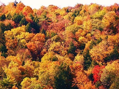 Mountain Foliage Series 054 by Van Ness