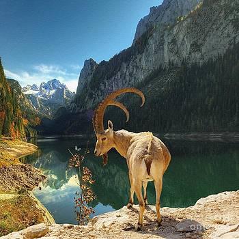 Liane Wright - Mountain Goat