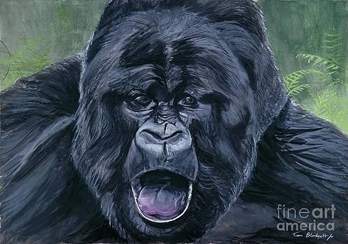 Mountain Gorilla by Tom Blodgett Jr