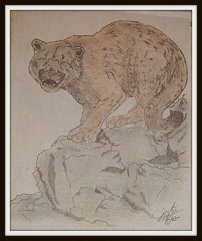 Mountain Lion by Janet Moss