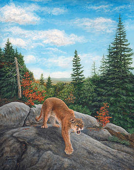 Mountain Lion by Marshall Bannister