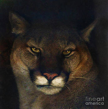 Mountain Lioness by Skye Ryan-Evans