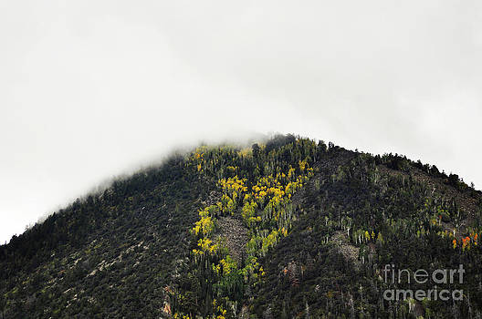 Mountain Mist  by Juls Adams