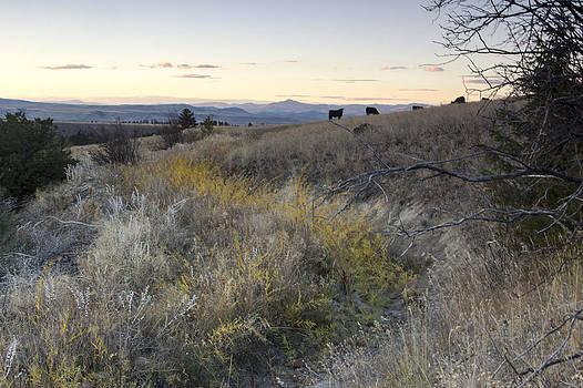 Mountain range in Montana by Dana Moyer